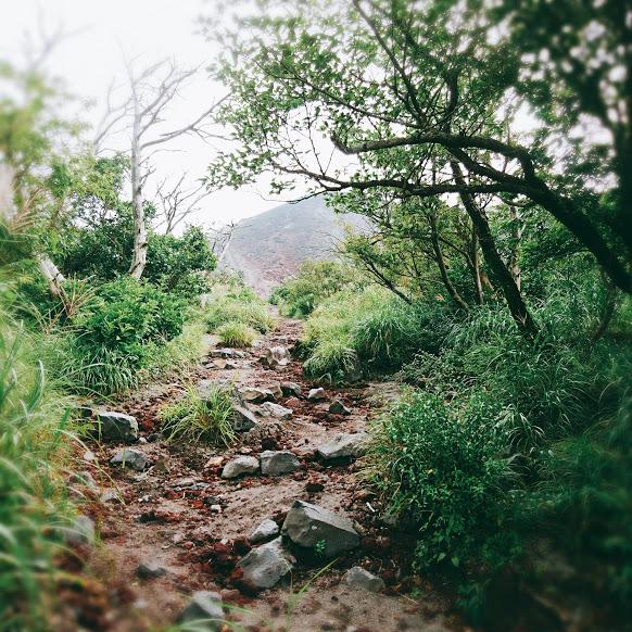 Die Wanderung beginnt auf einem Pfad gesäumt von Bäumen und Büschen.