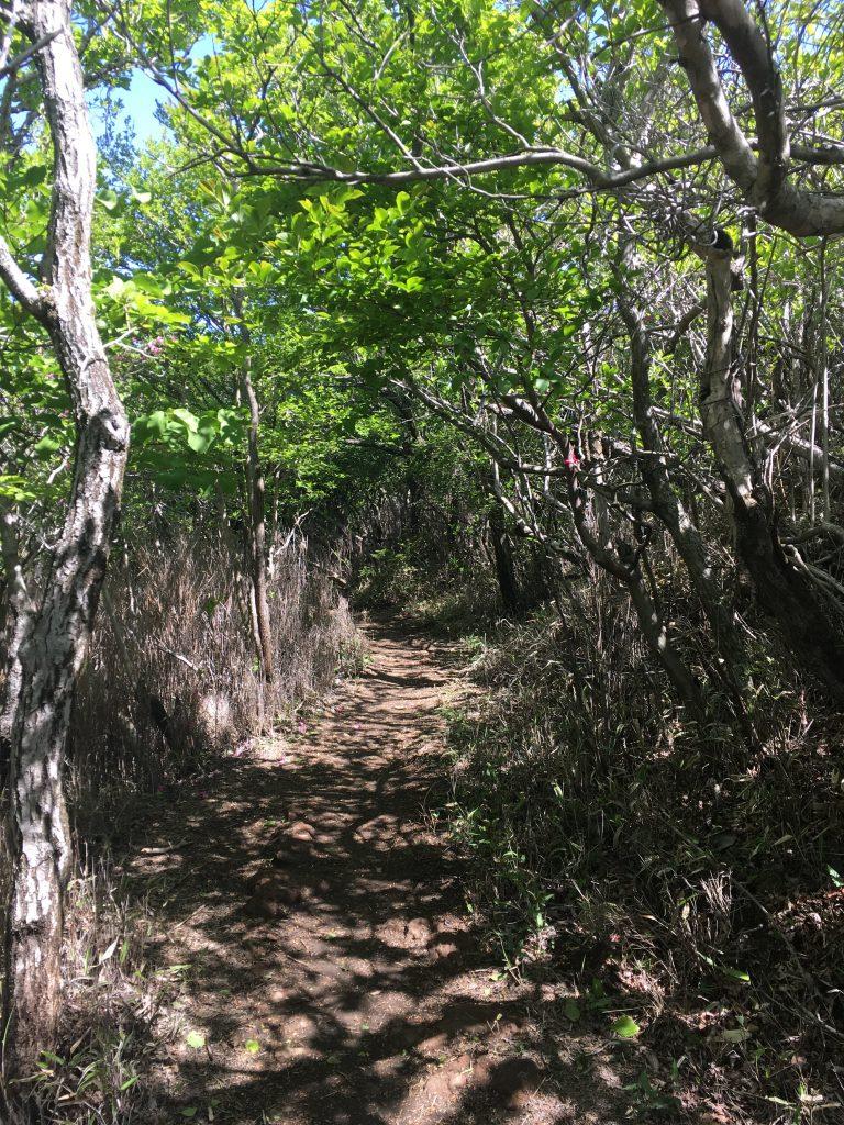 Weg gesäumt von Bäumen und Büschen auf dem Wanderweg auf Karakunidake vom Ebino Plateau aus.